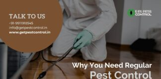 Why You Need Regular Pest Control